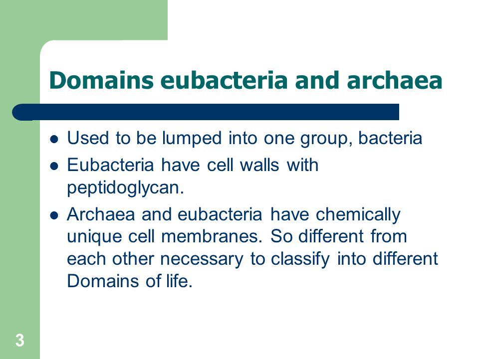 3 Domains eubacteria and archaea Used to be lumped into one group, bacteria Eubacteria have cell walls with peptidoglycan. Archaea and eubacteria have