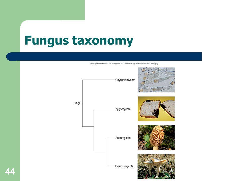 44 Fungus taxonomy