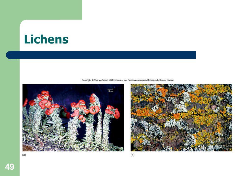49 Lichens