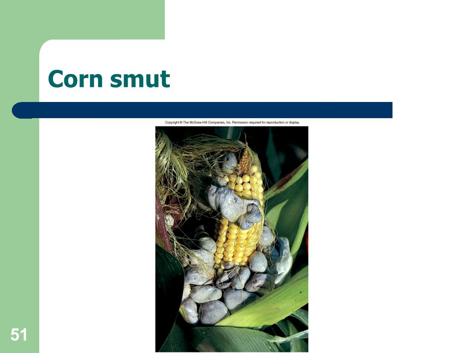 51 Corn smut