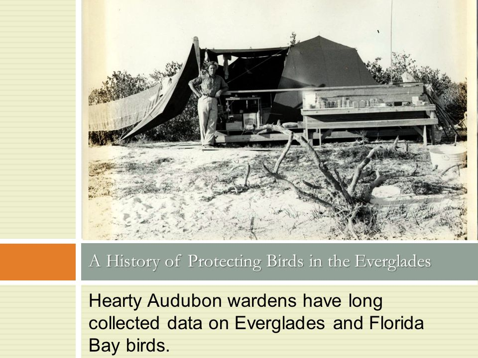 Hearty Audubon wardens have long collected data on Everglades and Florida Bay birds. A History of Protecting Birds in the Everglades Photo by UGArdene