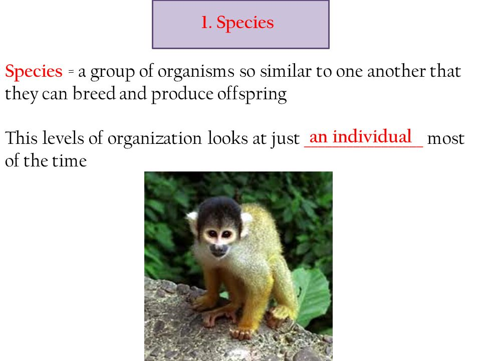 Species = a group of organisms so similar to one another that they can breed and produce offspring This levels of organization looks at just _________