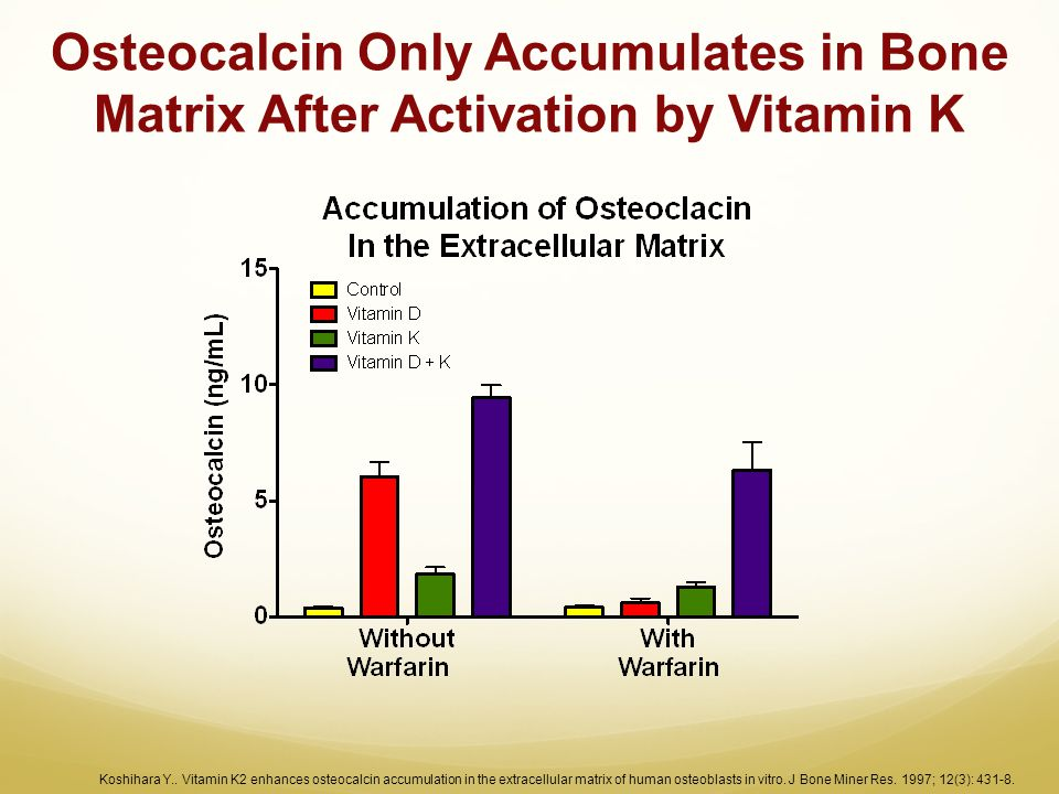 Osteocalcin Only Accumulates in Bone Matrix After Activation by Vitamin K Koshihara Y.. Vitamin K2 enhances osteocalcin accumulation in the extracellu