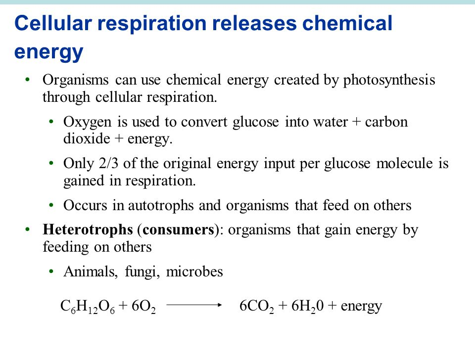 Cellular respiration releases chemical energy Organisms can use chemical energy created by photosynthesis through cellular respiration. Oxygen is used