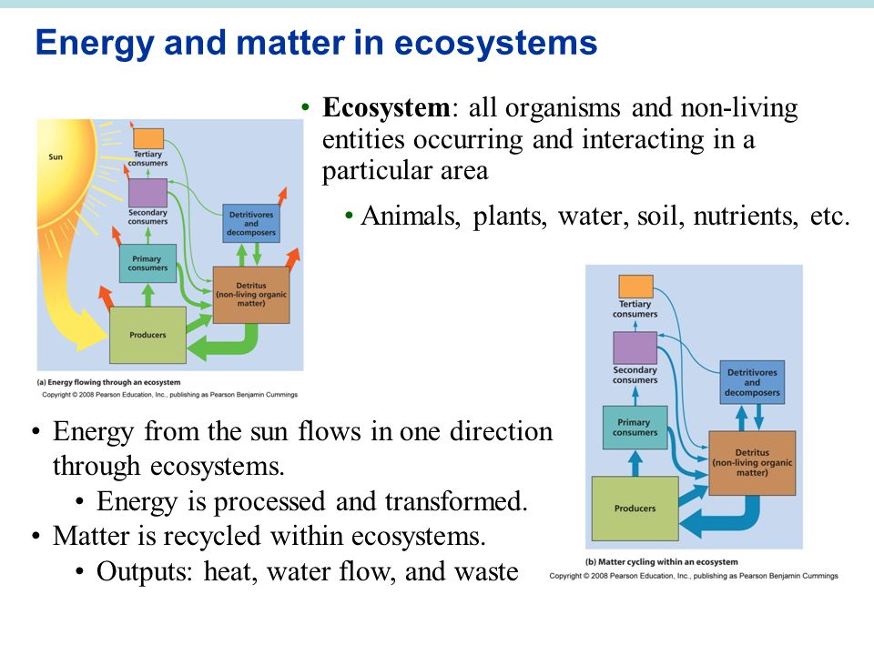 Energy and matter in ecosystems Ecosystem: all organisms and non-living entities occurring and interacting in a particular area Animals, plants, water