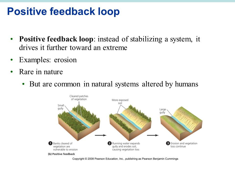Positive feedback loop Positive feedback loop: instead of stabilizing a system, it drives it further toward an extreme Examples: erosion Rare in natur