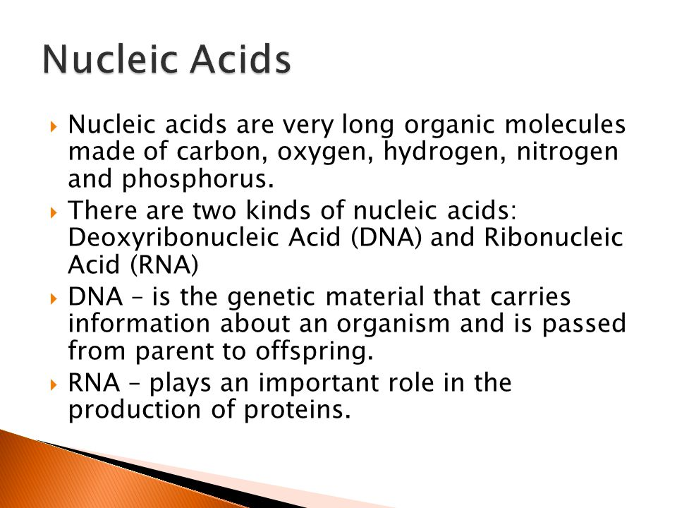  Nucleic acids are very long organic molecules made of carbon, oxygen, hydrogen, nitrogen and phosphorus.