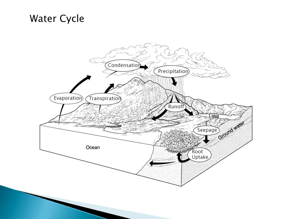 Condensation Seepage Runoff Precipitation Transpiration Evaporation Root Uptake Section 3-3 The Water Cycle Water Cycle