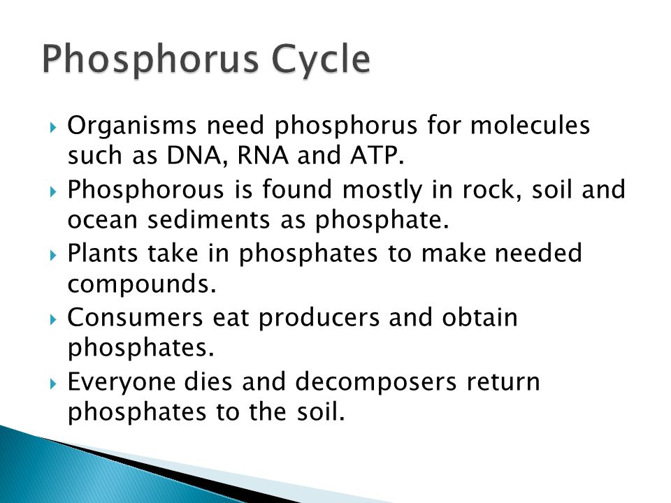  Organisms need phosphorus for molecules such as DNA, RNA and ATP.