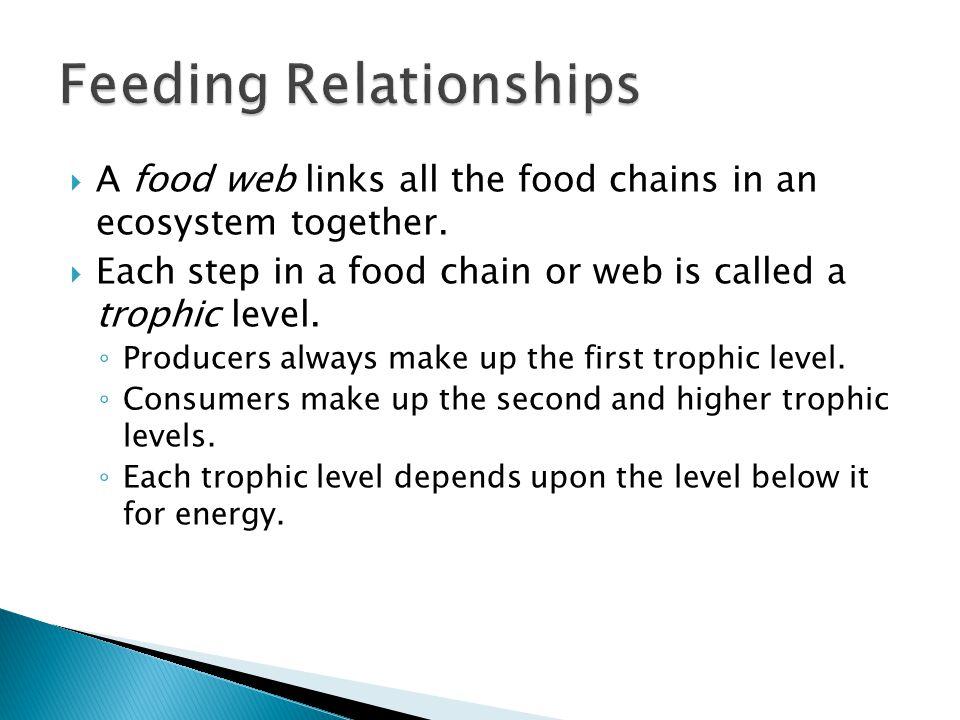 Section 3-2 Figure 3-8 A Food Web Food Web