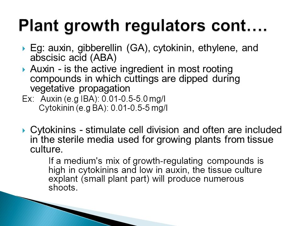  Eg: auxin, gibberellin (GA), cytokinin, ethylene, and abscisic acid (ABA)  Auxin - is the active ingredient in most rooting compounds in which cutt