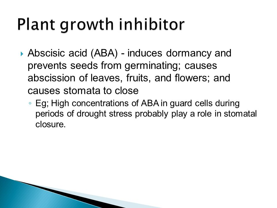  Abscisic acid (ABA) - induces dormancy and prevents seeds from germinating; causes abscission of leaves, fruits, and flowers; and causes stomata to