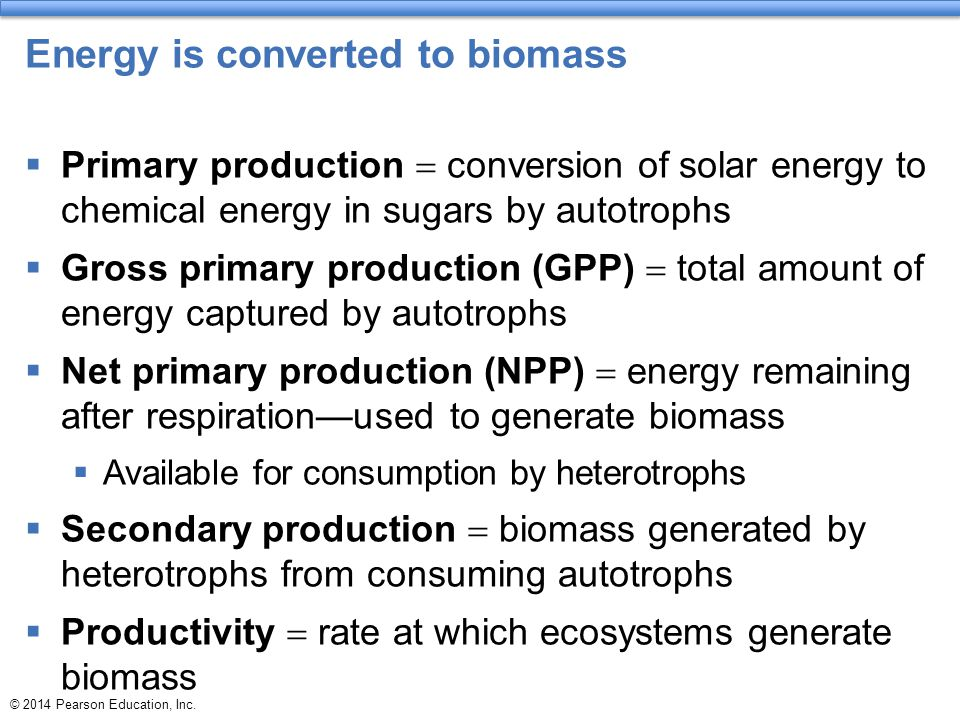 Energy is converted to biomass  Primary production  conversion of solar energy to chemical energy in sugars by autotrophs  Gross primary production