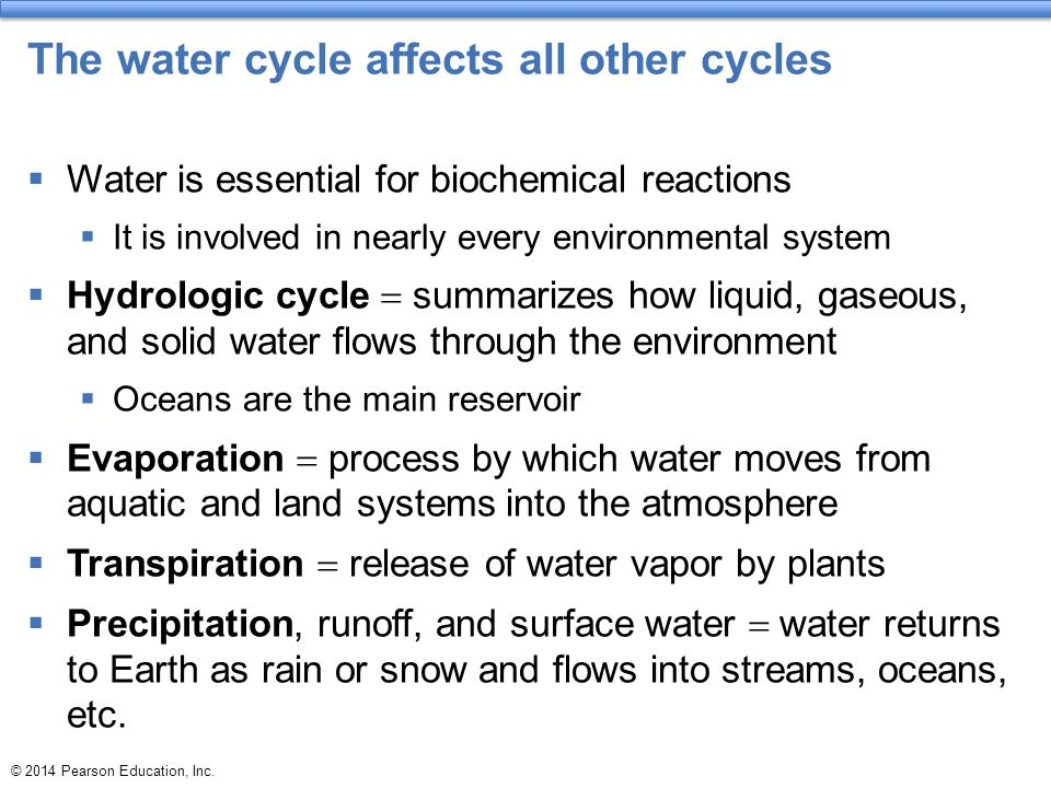 The water cycle affects all other cycles  Water is essential for biochemical reactions  It is involved in nearly every environmental system  Hydrol