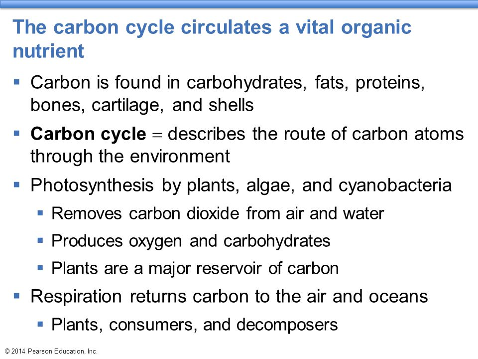 © 2014 Pearson Education, Inc. The carbon cycle circulates a vital organic nutrient  Carbon is found in carbohydrates, fats, proteins, bones, cartila