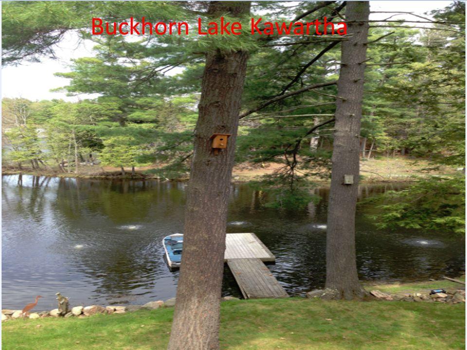 Buckhorn Lake Kawartha