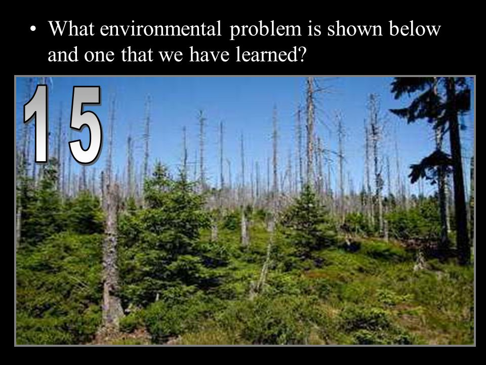 What environmental problem is shown below and one that we have learned