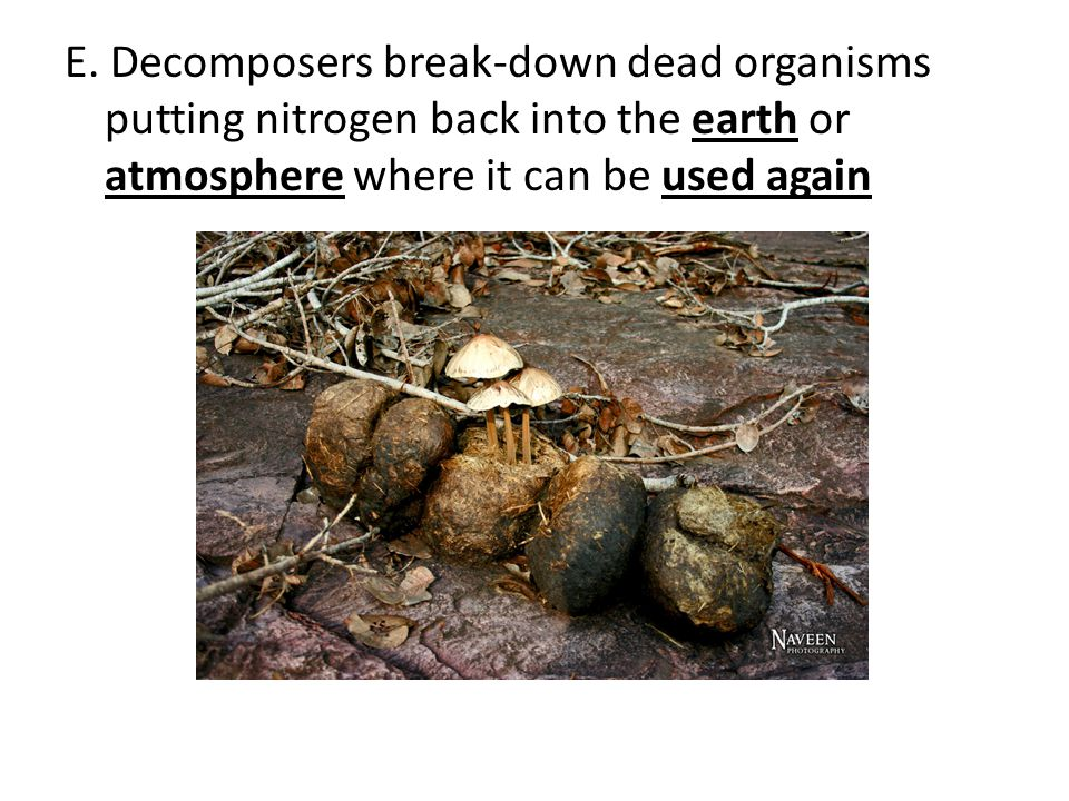 E. Decomposers break-down dead organisms putting nitrogen back into the earth or atmosphere where it can be used again