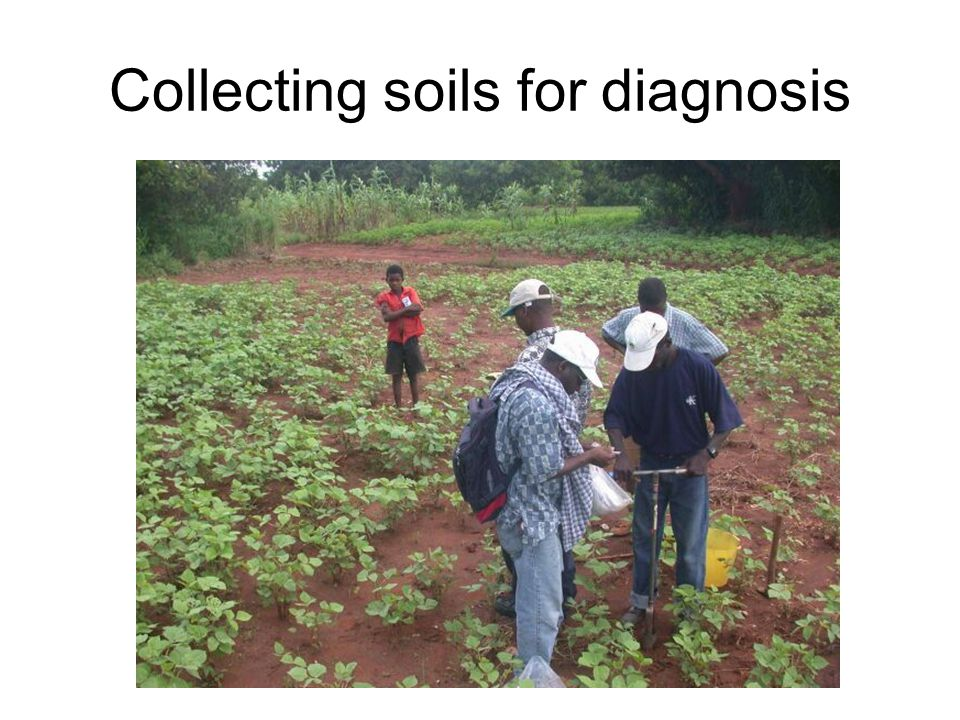 Collecting soils for diagnosis