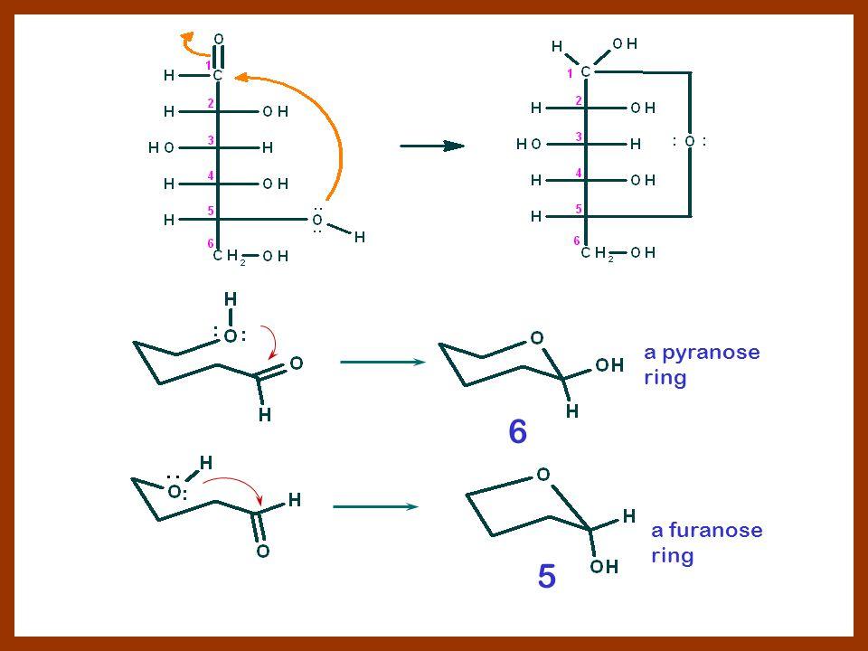 a pyranose ring a furanose ring 6 5