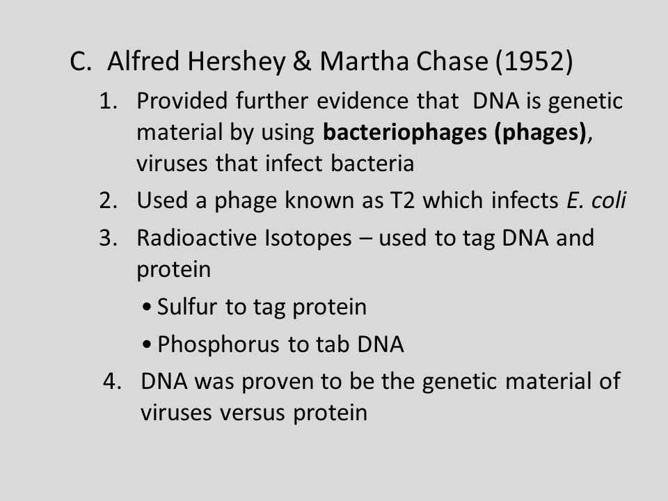 C.Alfred Hershey & Martha Chase (1952) 1.Provided further evidence that DNA is genetic material by using bacteriophages (phages), viruses that infect bacteria 2.Used a phage known as T2 which infects E.