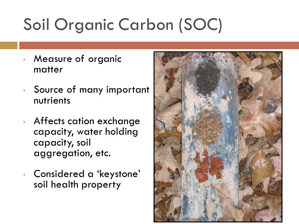 Measure of organic matter Source of many important nutrients Affects cation exchange capacity, water holding capacity, soil aggregation, etc.
