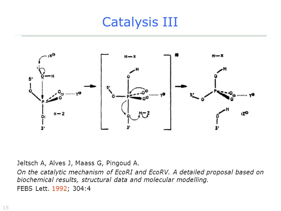 15 Catalysis III Jeltsch A, Alves J, Maass G, Pingoud A.