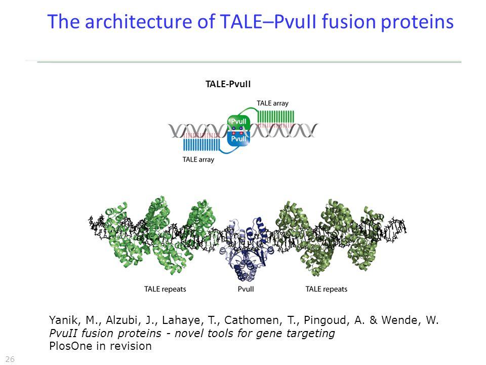 26 The architecture of TALE–PvuII fusion proteins TALE-PvuII Yanik, M., Alzubi, J., Lahaye, T., Cathomen, T., Pingoud, A.
