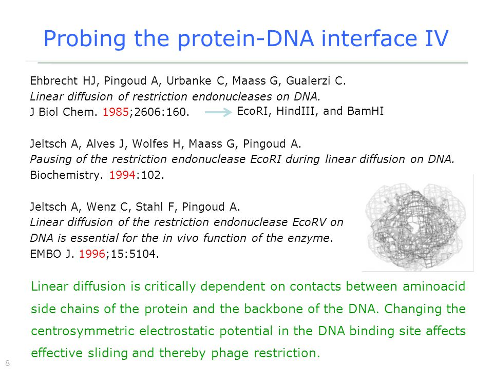 8 Probing the protein-DNA interface IV Ehbrecht HJ, Pingoud A, Urbanke C, Maass G, Gualerzi C.