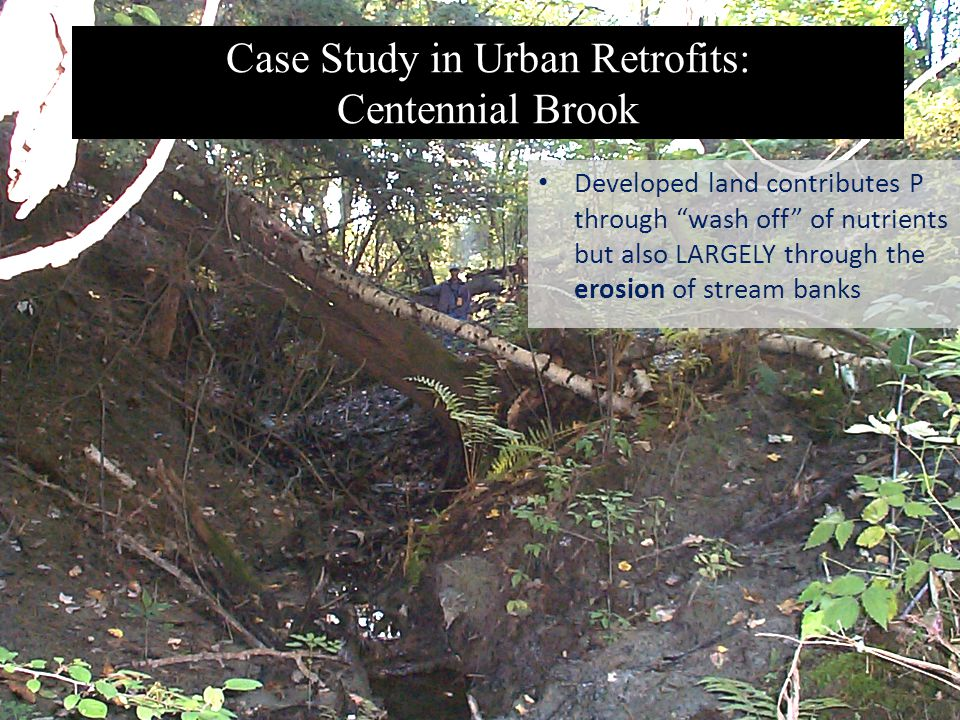 Case Study in Urban Retrofits: Centennial Brook Developed land contributes P through wash off of nutrients but also LARGELY through the erosion of stream banks