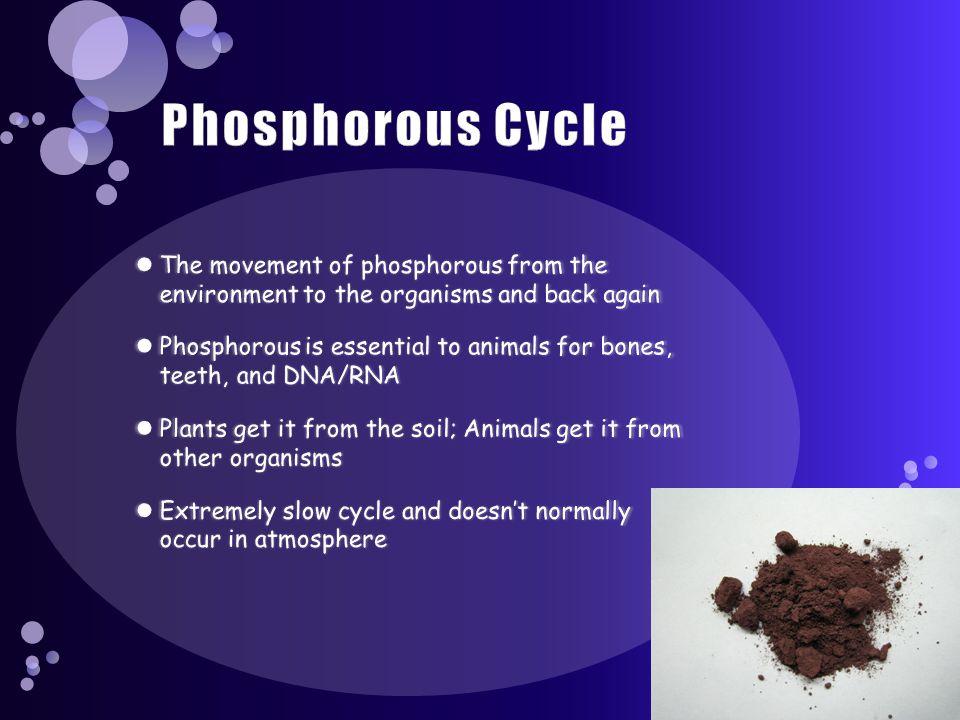 Phosphorus cycle Loss to deep sediment Rocks and minerals Soluble soil phosphate Plants and algae Plants Urine Land animals Precipitates Aquatic anima
