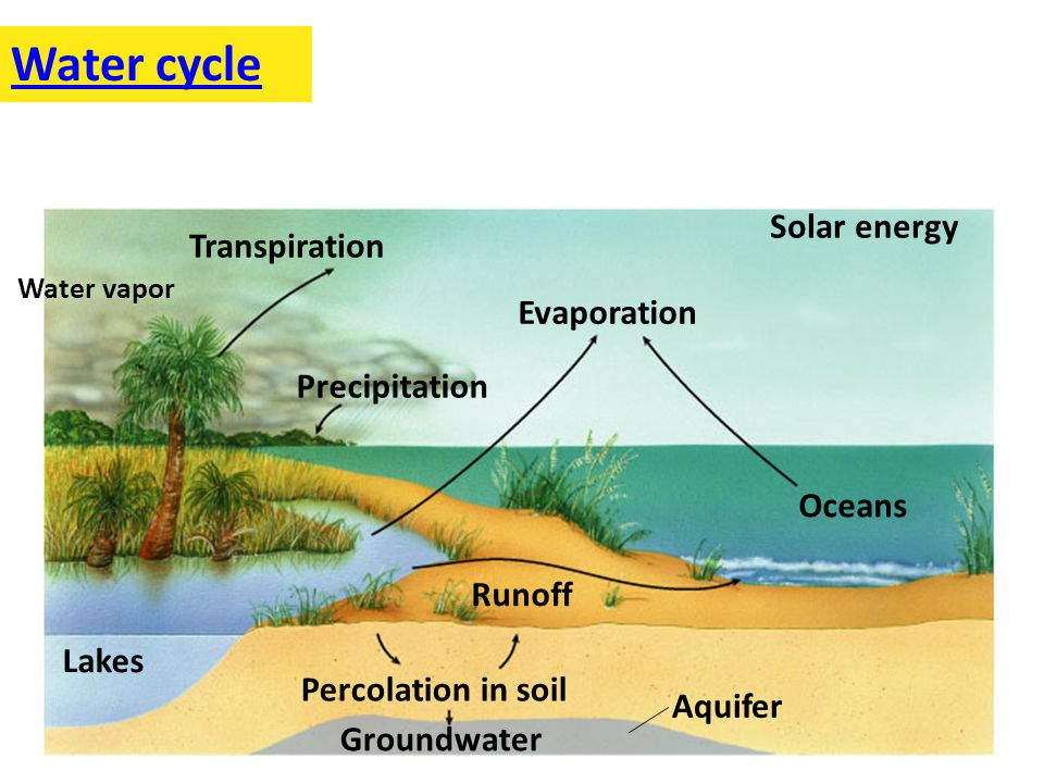 Lakes Runoff Percolation in soil Evaporation Transpiration Precipitation Oceans Solar energy Aquifer Groundwater Water cycle Water vapor