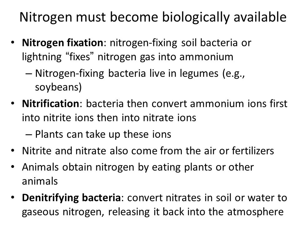 "Nitrogen must become biologically available Nitrogen fixation: nitrogen-fixing soil bacteria or lightning ""fixes"" nitrogen gas into ammonium – Nitroge"