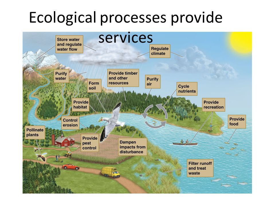 Ecological processes provide services