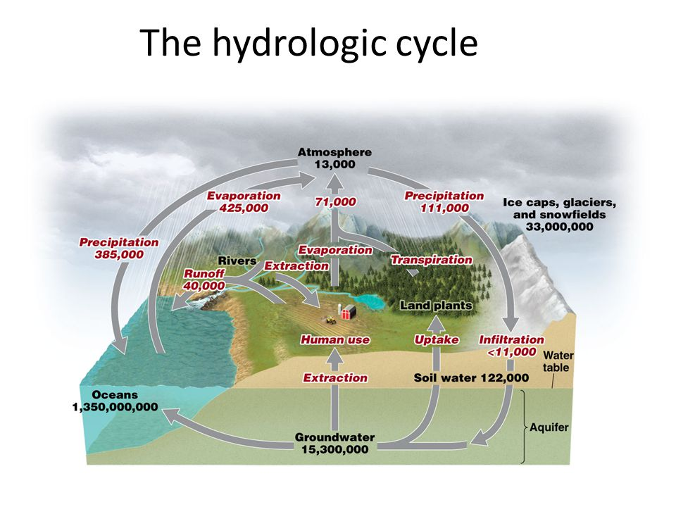 Human impacts on the hydrologic cycle Humans have affected almost every flux, reservoir, and residence time in the water cycle Damming rivers slows water movement and increases evaporation Removal of vegetation increases runoff and erosion while decreasing infiltration and transpiration Overdrawing surface and groundwater for agriculture, industry, and domestic uses lowers water tables Emitting air pollutants that dissolve in water changes the nature of precipitation and decreases cleansing