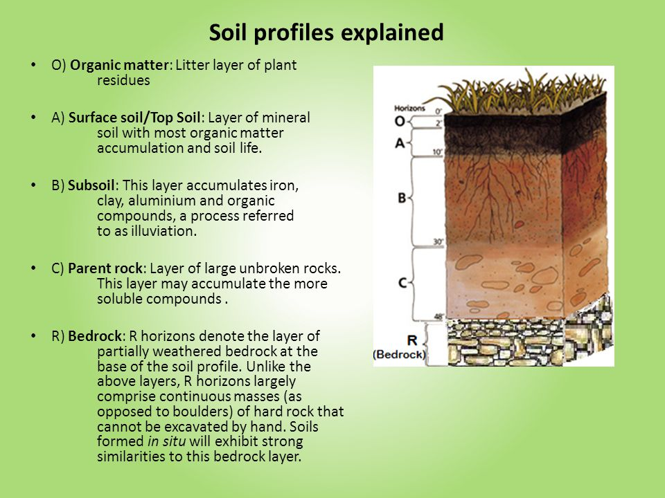 Think of your soil as a living organism Feed your soil, if your soil is healthy and in balance your plants will love you for it Ask yourself, will this be good or bad for my soil Think about the Soil Food Web The soil is like a farmer s bank.
