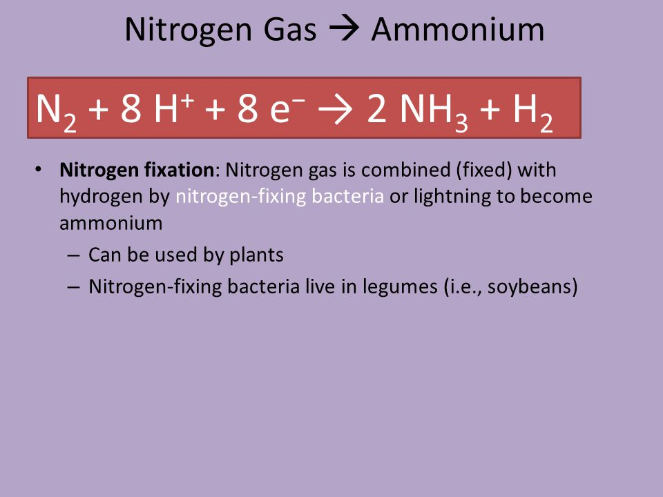 Nitrogen Gas  Ammonium Nitrogen fixation: Nitrogen gas is combined (fixed) with hydrogen by nitrogen-fixing bacteria or lightning to become ammonium