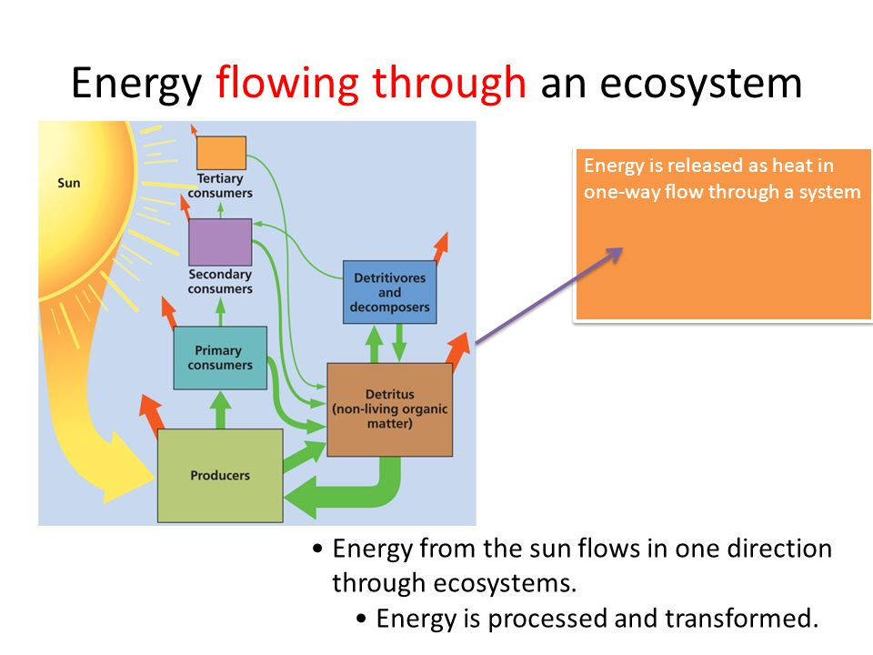 Energy flowing through an ecosystem Energy from the sun flows in one direction through ecosystems. Energy is processed and transformed. Energy is rele