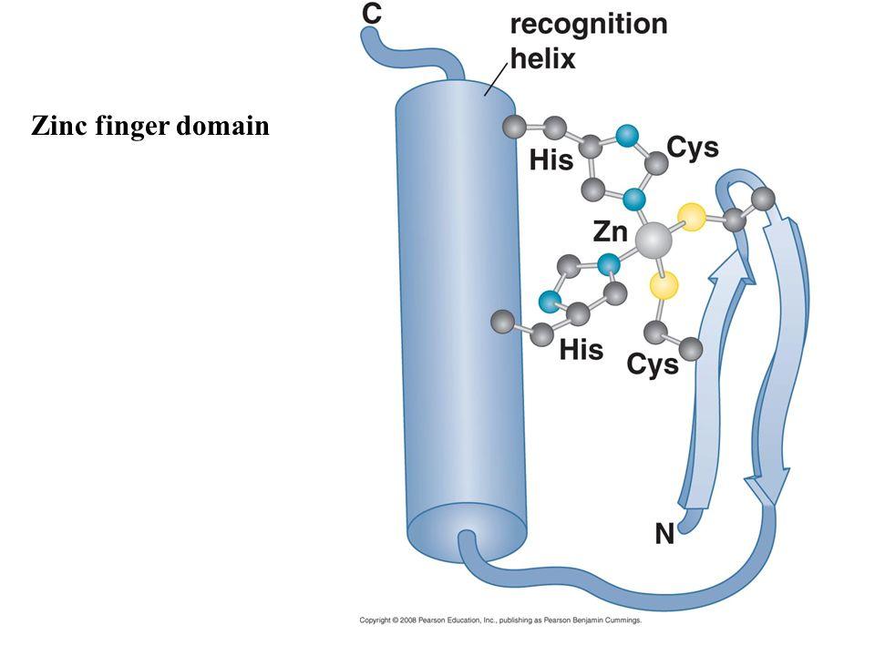 Zinc finger domain