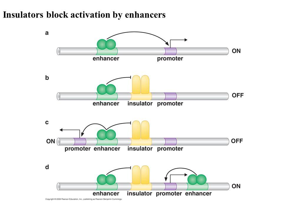 Insulators block activation by enhancers