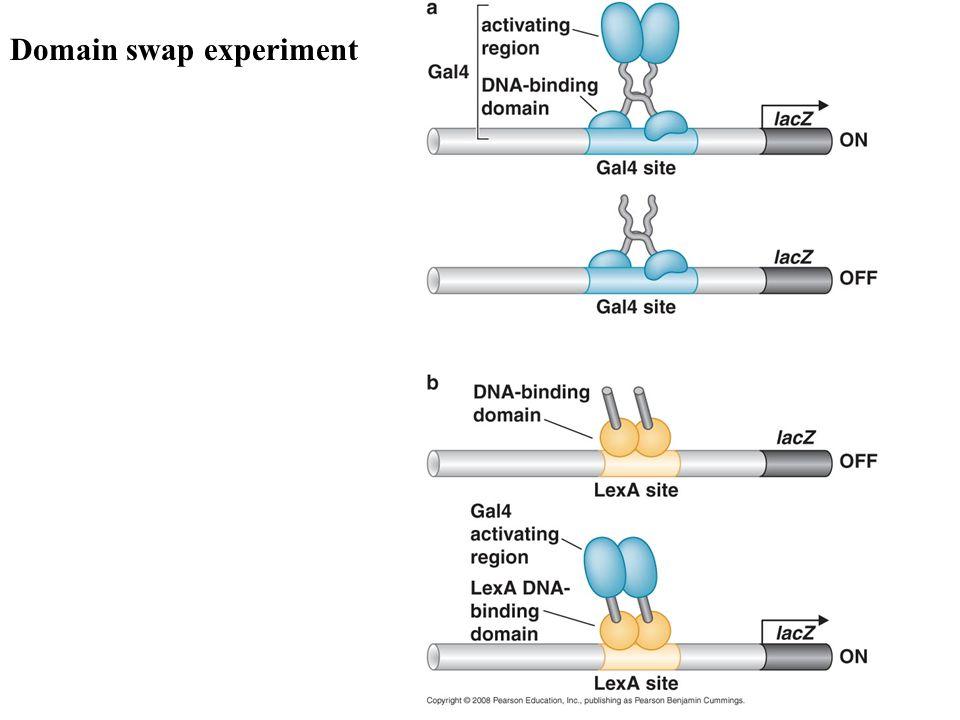 Domain swap experiment