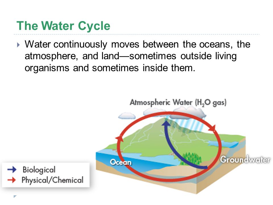 The Water Cycle  Water continuously moves between the oceans, the atmosphere, and land—sometimes outside living organisms and sometimes inside them.