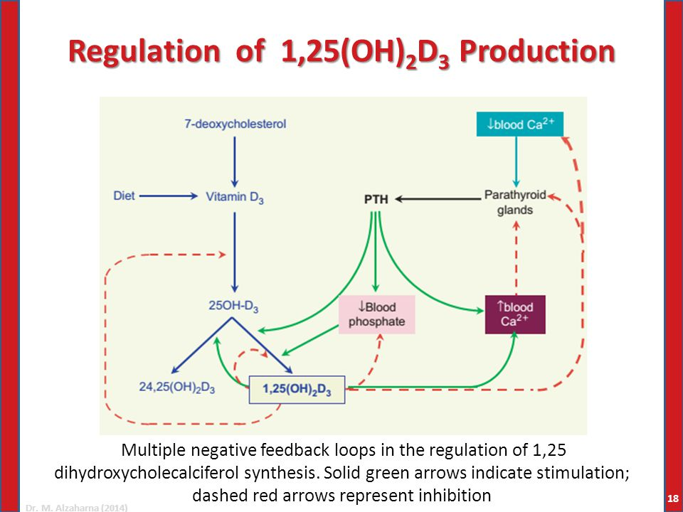 Dr. M. Alzaharna (2014) Regulation of 1,25(OH) 2 D 3 Production Multiple negative feedback loops in the regulation of 1,25 dihydroxycholecalciferol sy