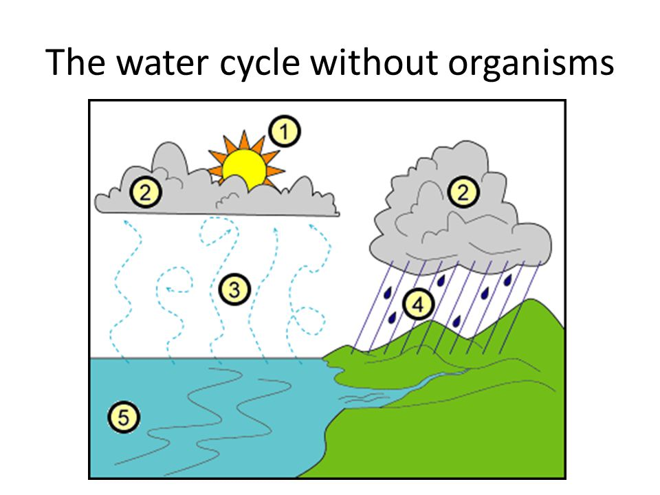 Water Cycle Where is water found Surface of ponds, lakes, etc. Atmosphere (vapor) Within organisms