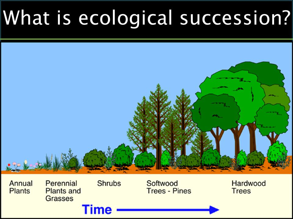 What is ecological succession