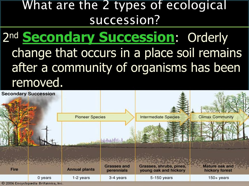 2 nd Secondary Succession : Orderly change that occurs in a place soil remains after a community of organisms has been removed.