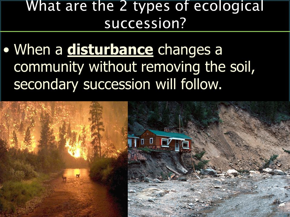 When a disturbance changes a community without removing the soil, secondary succession will follow.