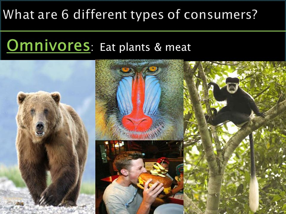 Omnivores : Eat plants & meat