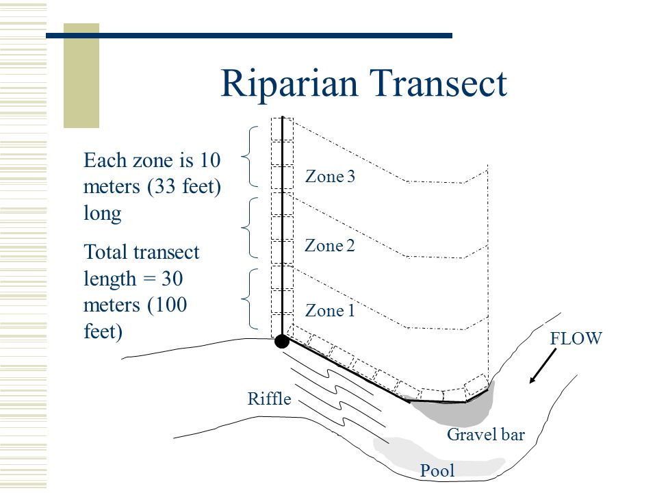 Riparian Transect FLOW Pool Gravel bar Riffle Zone 1 Zone 2 Zone 3 Each zone is 10 meters (33 feet) long Total transect length = 30 meters (100 feet)