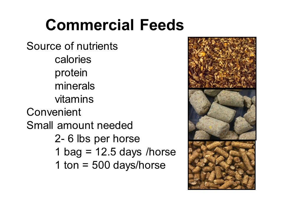 Commercial Feeds Source of nutrients calories protein minerals vitamins Convenient Small amount needed 2- 6 lbs per horse 1 bag = 12.5 days /horse 1 ton = 500 days/horse